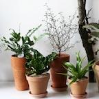 공기정화식물-토분모음