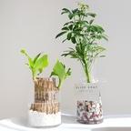 수경재배식물 14종