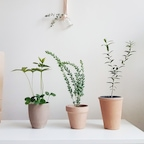 예쁜 공기정화식물 토분세트 모음
