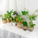 공기정화식물20종+토분15종 풀세트