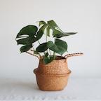라탄 화분세트 공기정화식물 8종