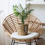 [품절]위브팟 & 공기정화식물 SET (M사이즈)