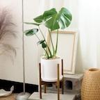 공기정화식물 중형 화이트 화분 세트 7종