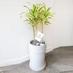감각적인 화분의 공기정화식물 대형 5종