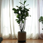 모던 인테리어 특대형 식물 ( 당일배송/지정일배송)