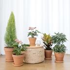 이태리토분 인테리어 식물 14종