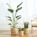 라탄바구니 인테리어 식물 18종 모음