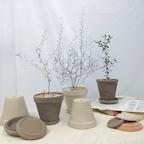 [오늘의딜] 인테리어 감성식물 마오리 소포라 외 5종