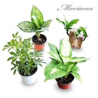 그리너리 공기정화식물 모음전