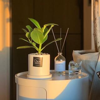 공기정화식물 11종